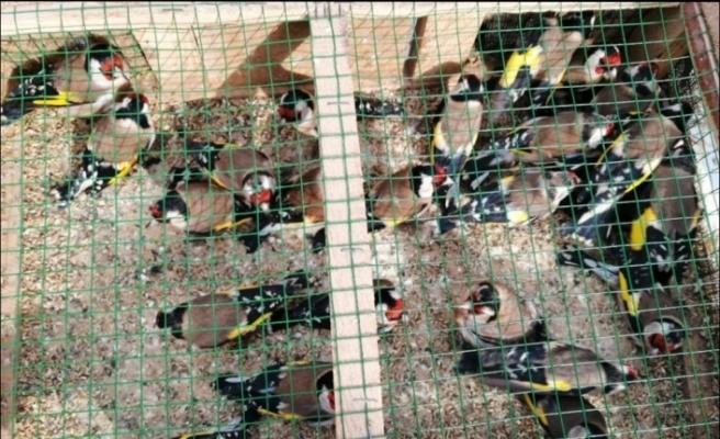 Adana'da pazarda satılan kuşlara el konuldu