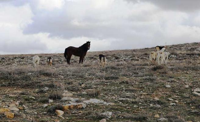 At ve köpeklerin dostluğu şaşırtıyor…