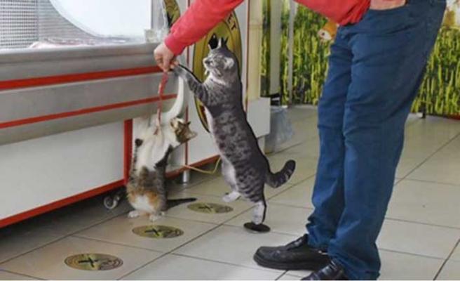 Fenomen kedi 'Yeşim' için mezar