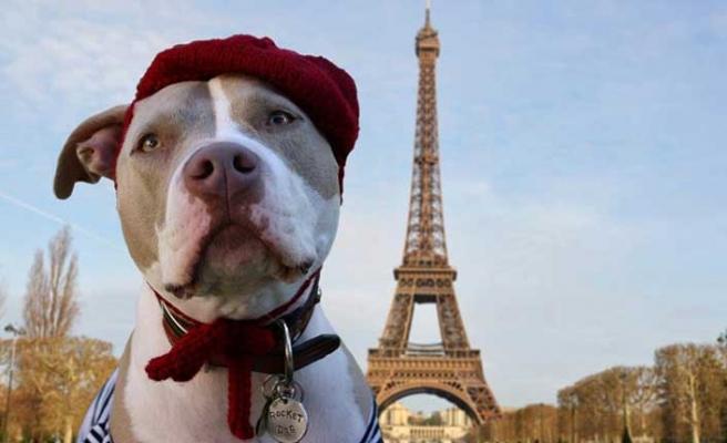 Fransa'da ilginç olay! Köpeklerin havlamasını yasakladı
