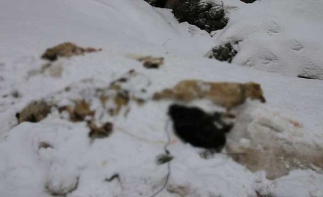 Konya'da ayakları bağlanmış 7 köpek ölü bulundu