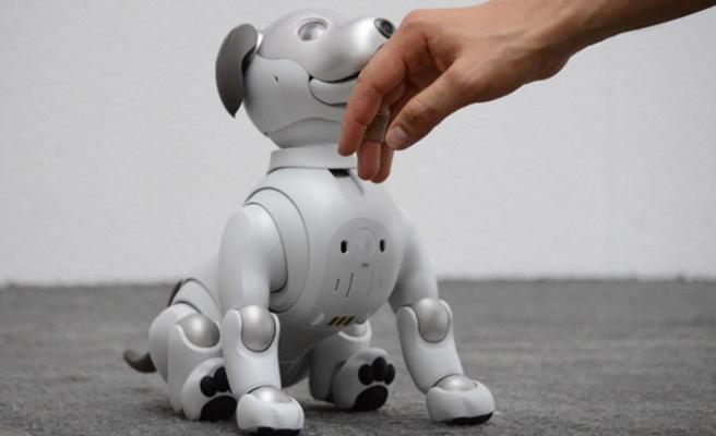 İsveç'te yalnızlıktan bunalanlara robot kedi ve köpek verildi