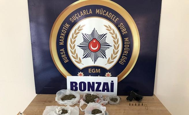 Bursa'da 'Bonzai' operasyonu: 10 gözaltı