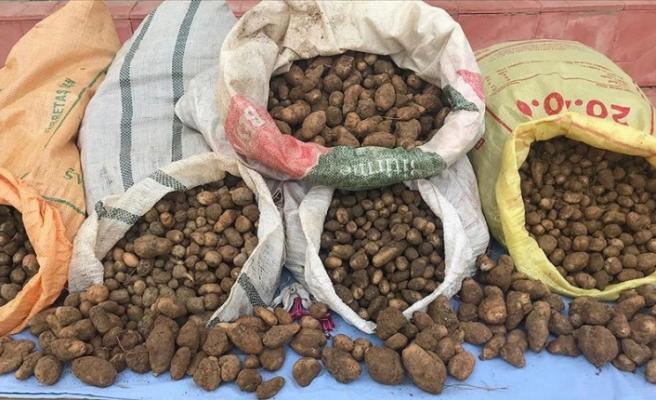Kaçak salep soğanı toplayan 4 kişiye 240 bin lira ceza