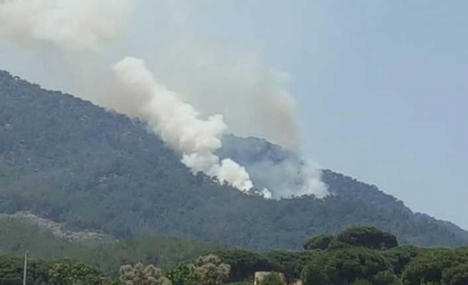 Muğla'da orman yangını... Çok sayıda ekip bölgede!