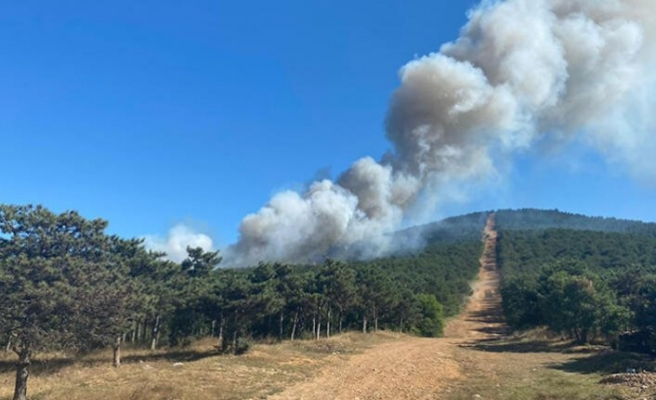 İstanbul Ataşehir'deki  orman yangını kontrol altında