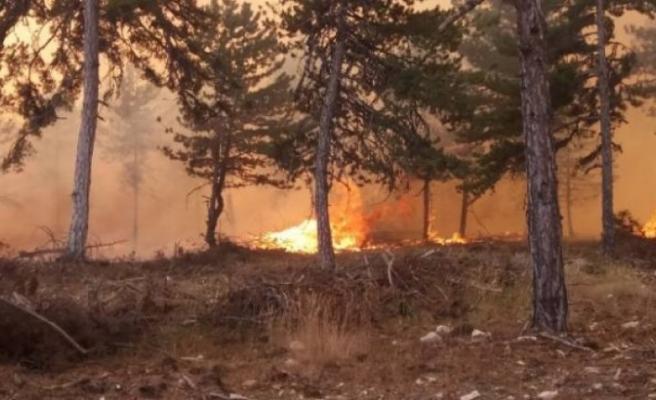 Hatay'da ormanlık alanda yangın çıktı
