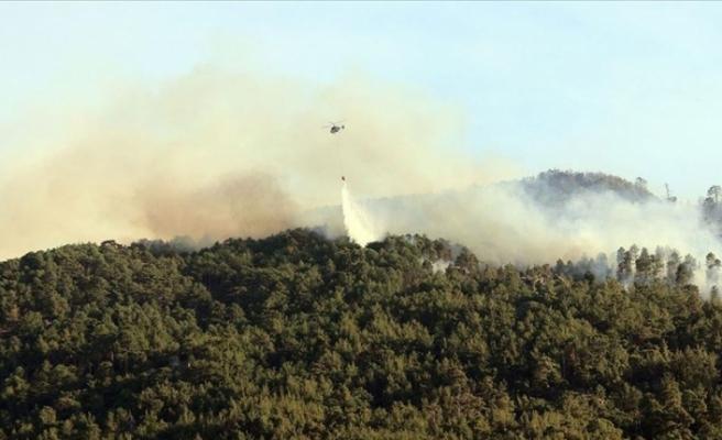 Aydın'da çıkan orman yangını Muğla'daki ormanlık alana sıçradı