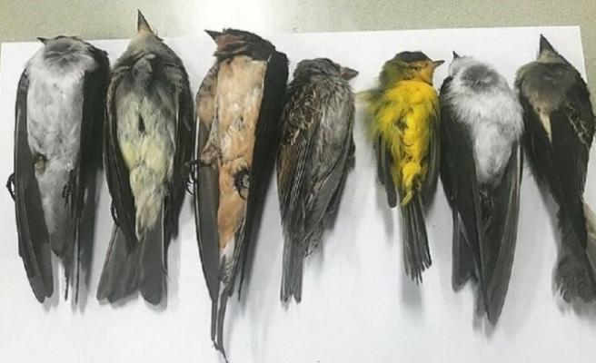 New Mexico'da gökten ölü kuş yağdı