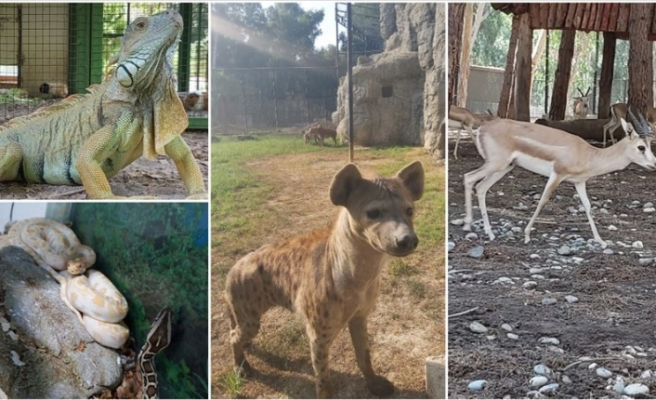 Tarsus Hayvanat Bahçesi'nin yeni üyeleri