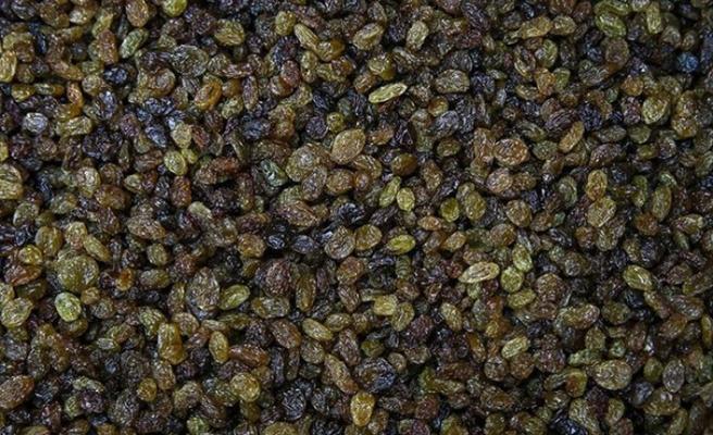 Toprak Mahsulleri Ofisi, kuru üzüm alımlarına başlıyor