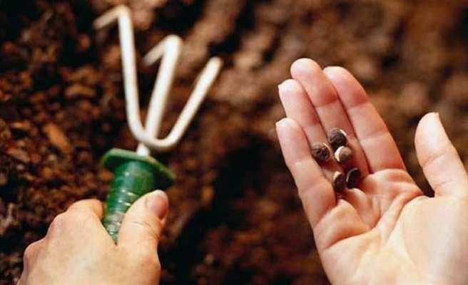 Tohum sanayicilerinden 'sertifikasız tohum' uyarısı