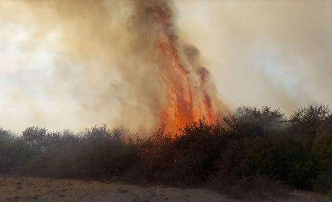 UNESCO Dünya Mirası Geçici Listesi'nde yer alan Kızılırmak Deltası Kuş Cenneti'nde yangın