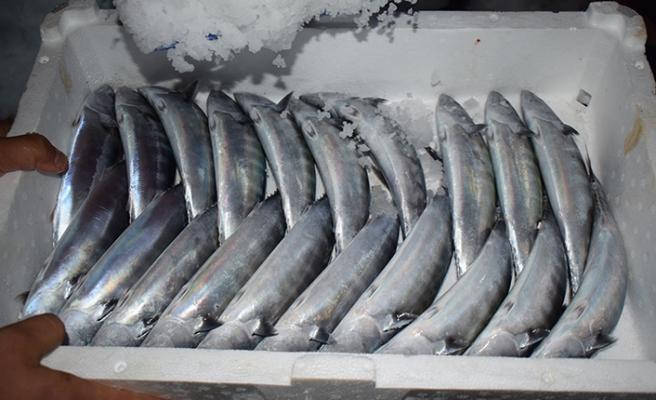 'Vira Bismillah' diye sezonu açan balıkçıların yüzünü palamut güldürdü