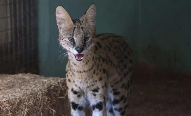 Yaralı yabani ve kaçak hayvanlar Gaziantep Hayvanat Bahçesi'nde yaşama tutunuyor