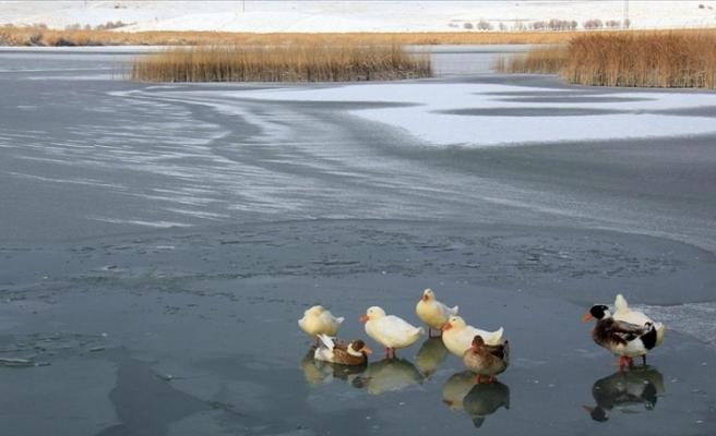 Sivas'ta Hafik Gölü buz tuttu
