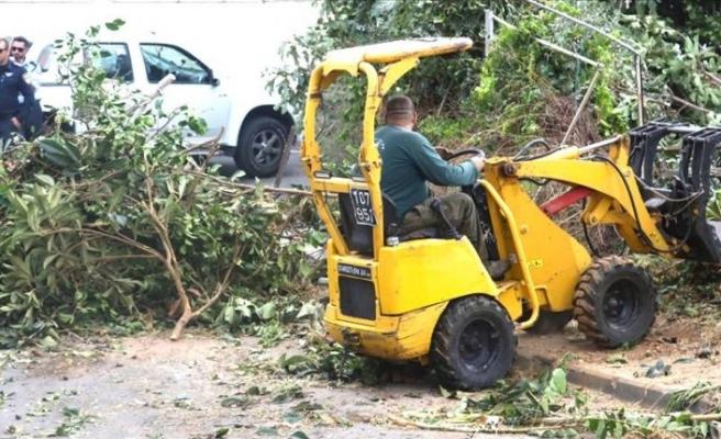 İşgalci İsrail durmak bilmiyor: Binlerce ağacı tahrip etti