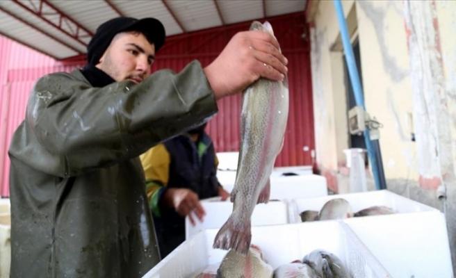 Tarım kentinden Avrupa'ya balık ihracatı