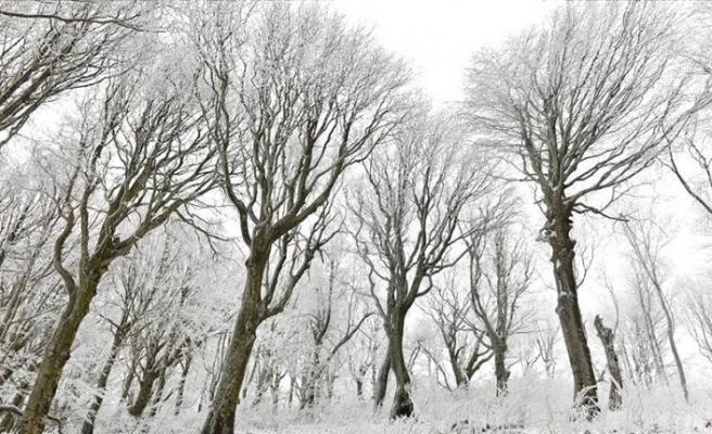 Kar Istranca Ormanları'nın güzelliğine güzellik kattı