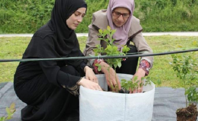 TİKA'dan Bosna Hersekli Kadınlara Tarım Desteği