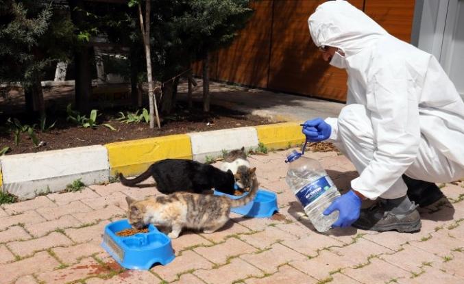 Sokak hayvanları için bir kap yemek bir kap su