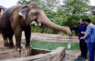Dünyanın en yalnız fili 'Kaavan'ın umuda yolculuğu başladı